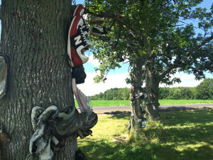Shoes on a Tree Trunk in Lyndonville, New York