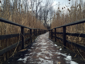 Boardwalk Trail in Tinker Nature Park in Henrietta, New York