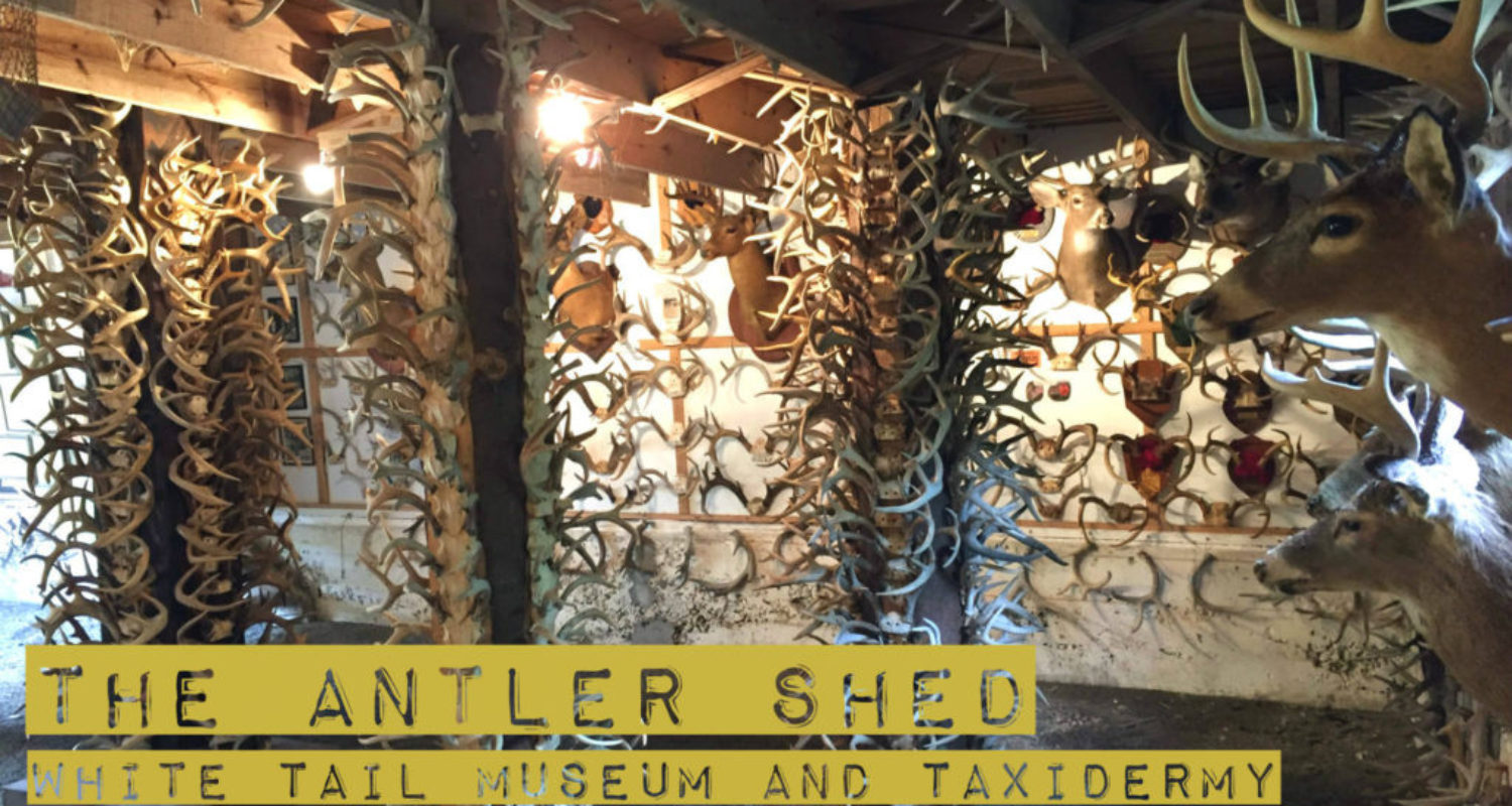 Antler Shed White Tail Museum - Featured Image