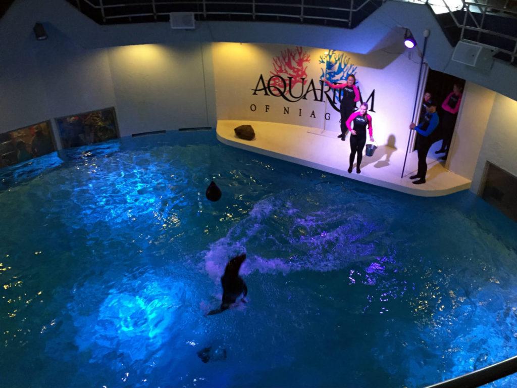 Sea Lion Show at the Aquarium of Niagara Falls USA