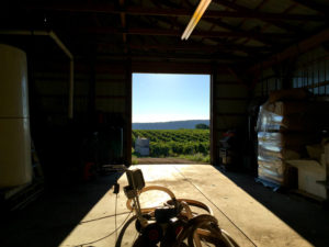 Randall-Standish Vineyards from Inside the Barn in Canandaigua, New York