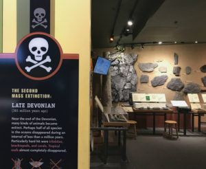 Late Devonian Period Room at the Museum of the Earth in Ithaca, New York