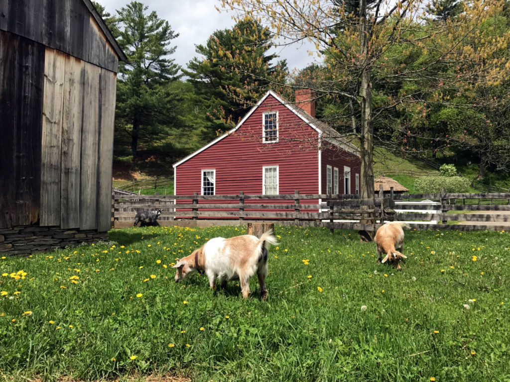 Working Farm at the Farmer's Museum in in Cooperstown, New York