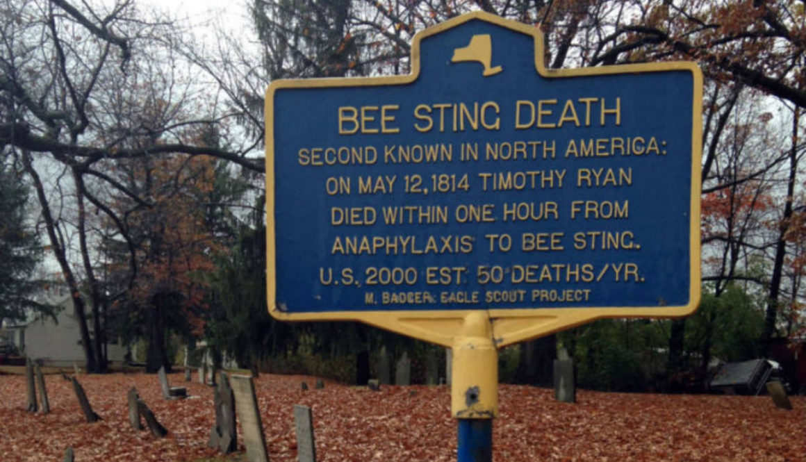 Bee Sting Death in Hopewell, NY - Featured Image