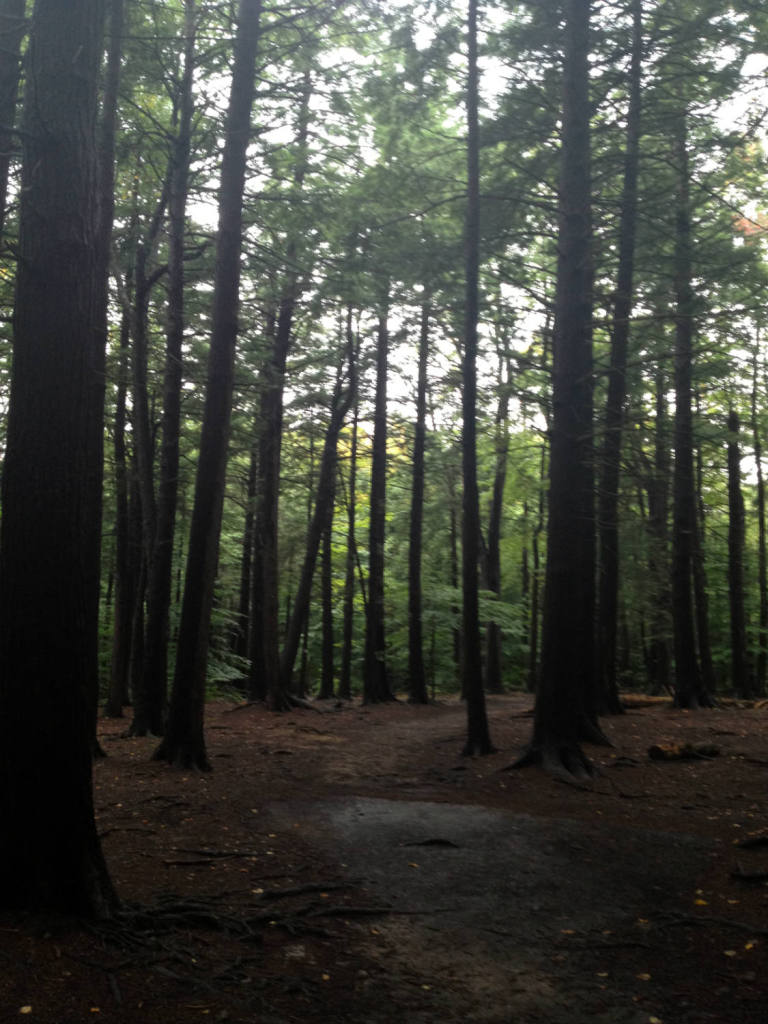 Trail to Eternal Flame Falls in Chestnut Ridge Park