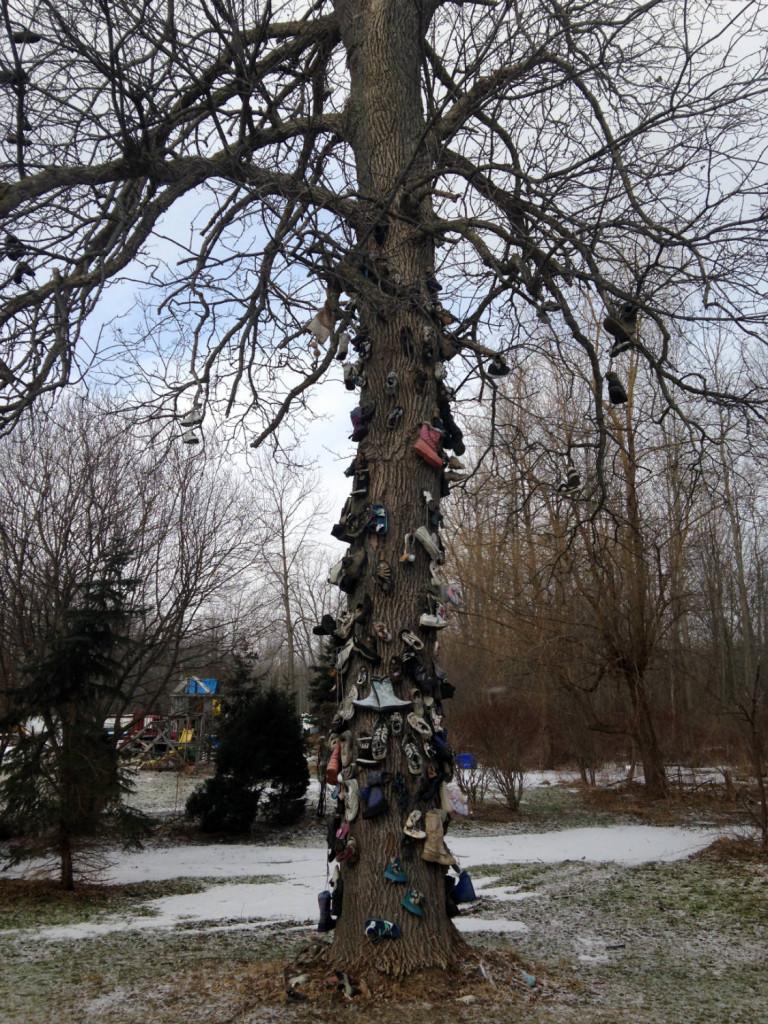Shoe Tree in East Amherst, NY near Buffalo