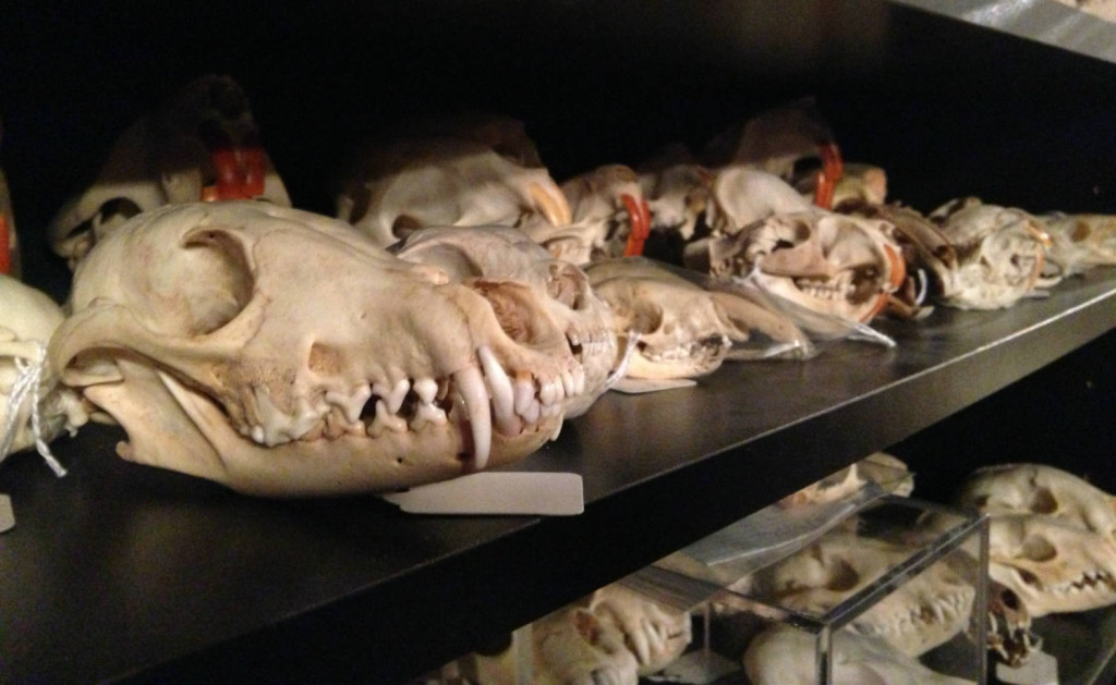 Skulls from the Cool Craniums Collection
