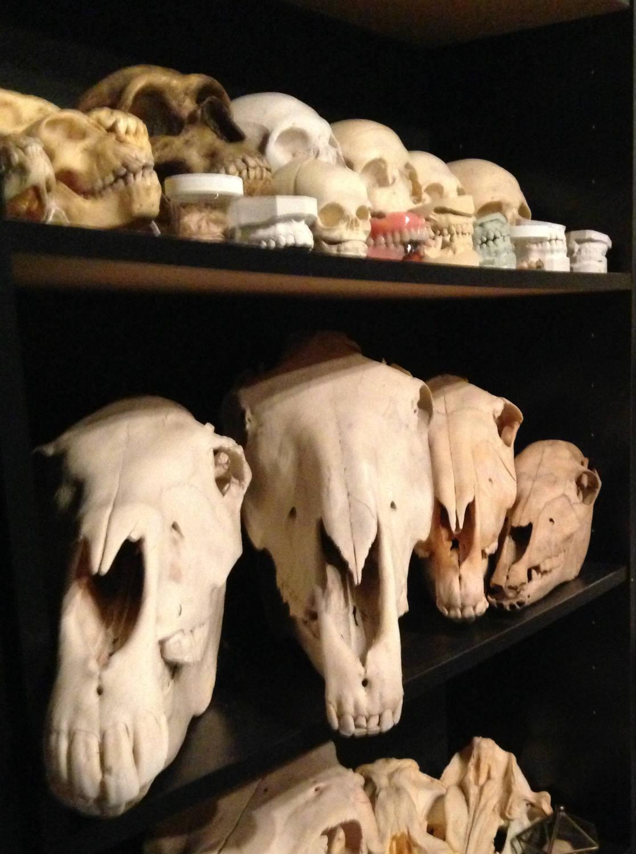 Skulls at Cool Craniums in Bergen, NY