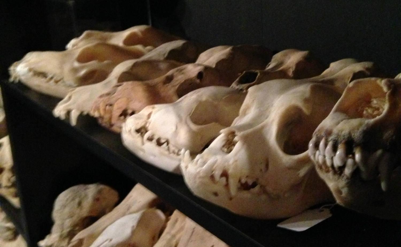 Different Skulls at Cool Craniums in Bergen