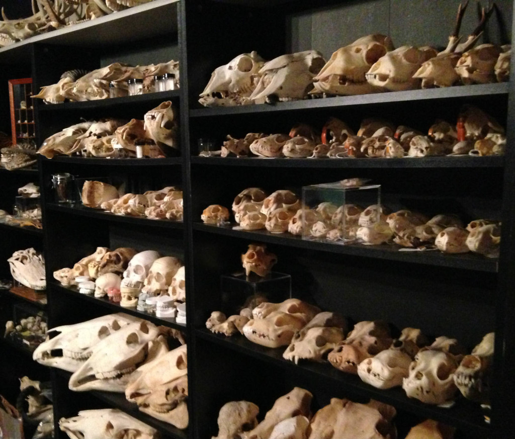Skulls on Shelves at private collection Monroe County