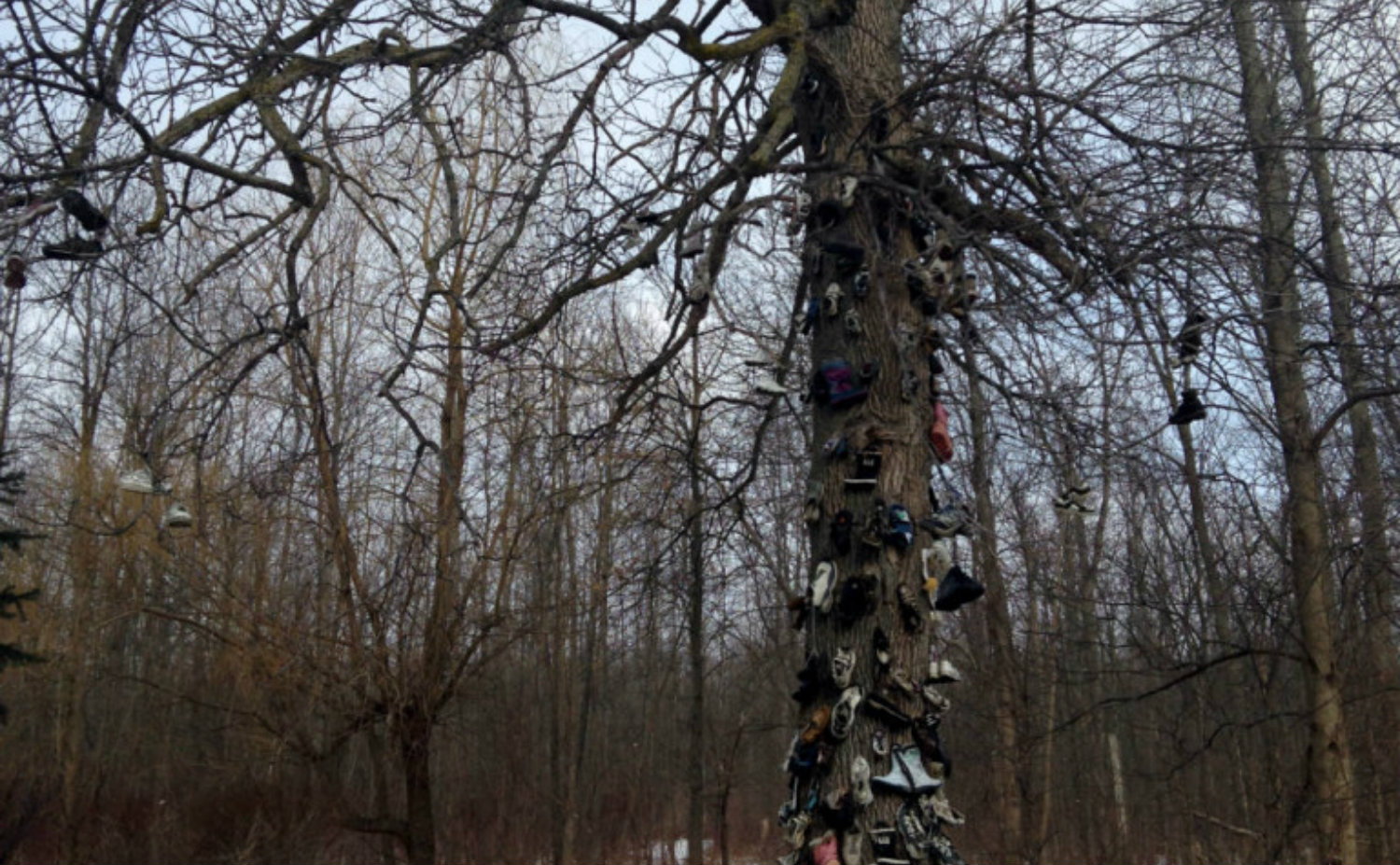 Shoe Tree of Amherst, NY - Featured Image