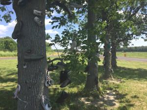 The Shoe Trees of Lyndonville, NY