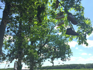 Shoes in a Tree in Lyndonville, New York