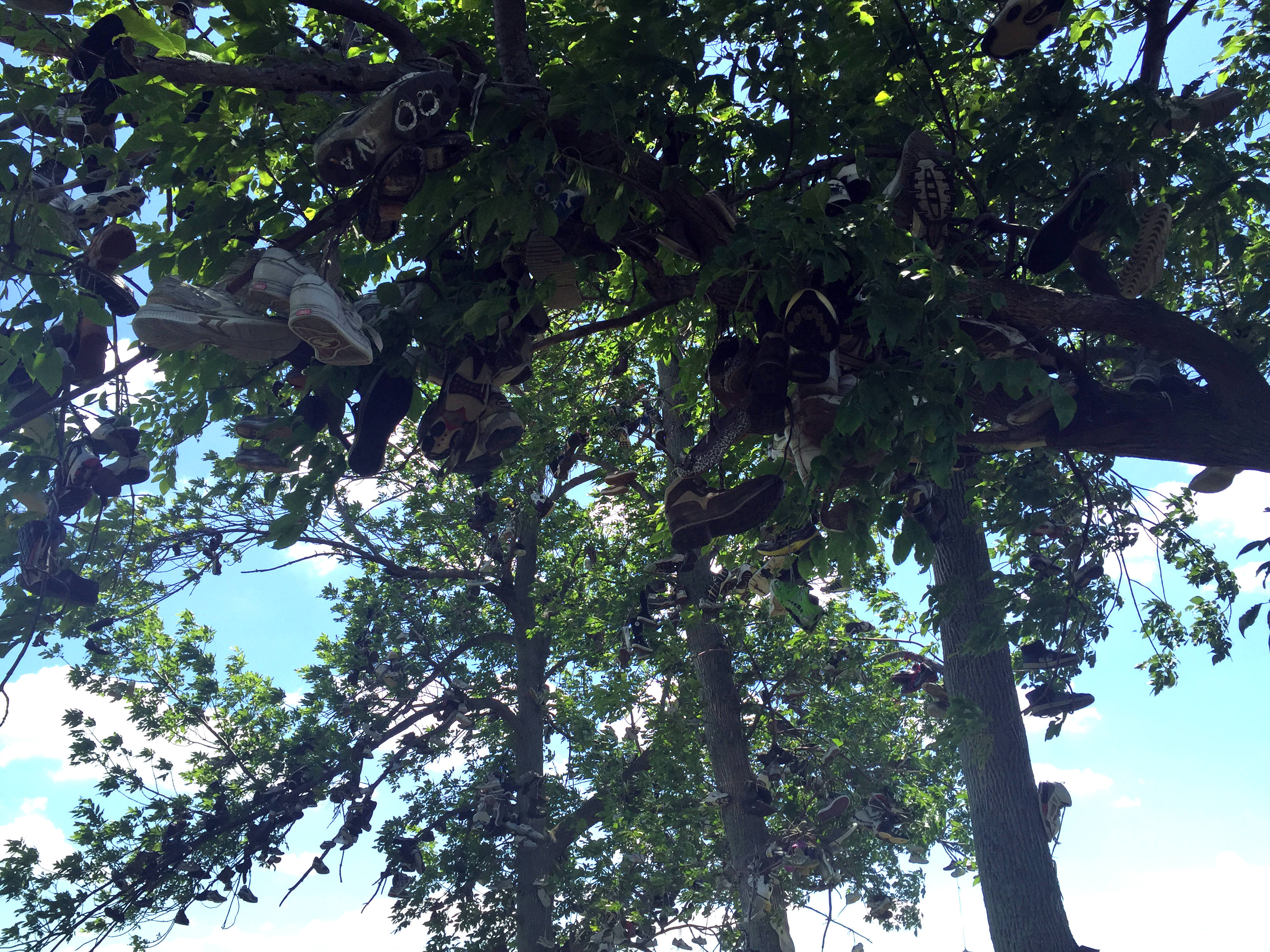 Shoe Tree In Lyndonville, New York