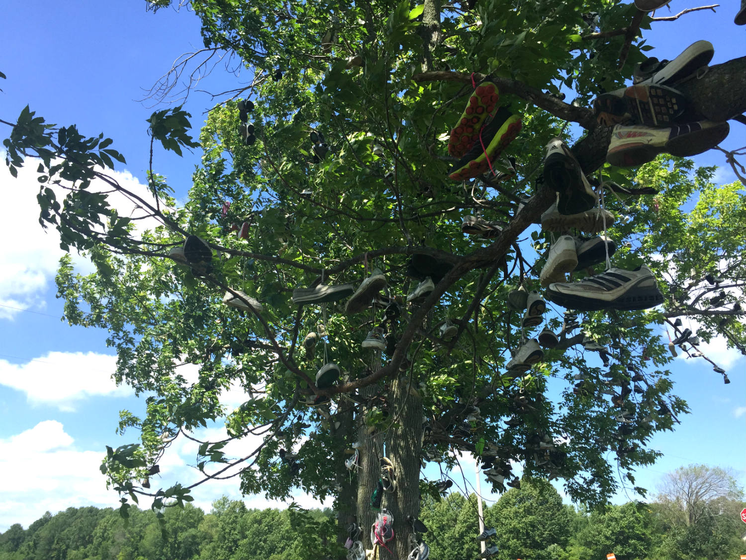 Branches with Shoes in Lyndonville, New York