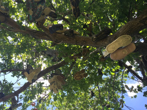 Shoes in a Tree in Lyndonville