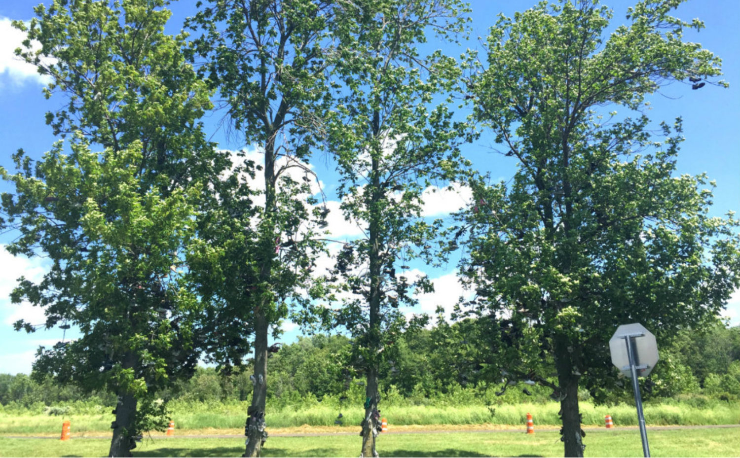 Shoe Trees in Lyndonville, NY - Featured Image
