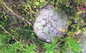 Turtlestone in Ricky Green Memorial Park