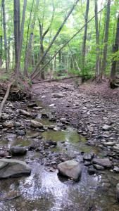 Creek in Ricky Green Memorial Park in Conesus