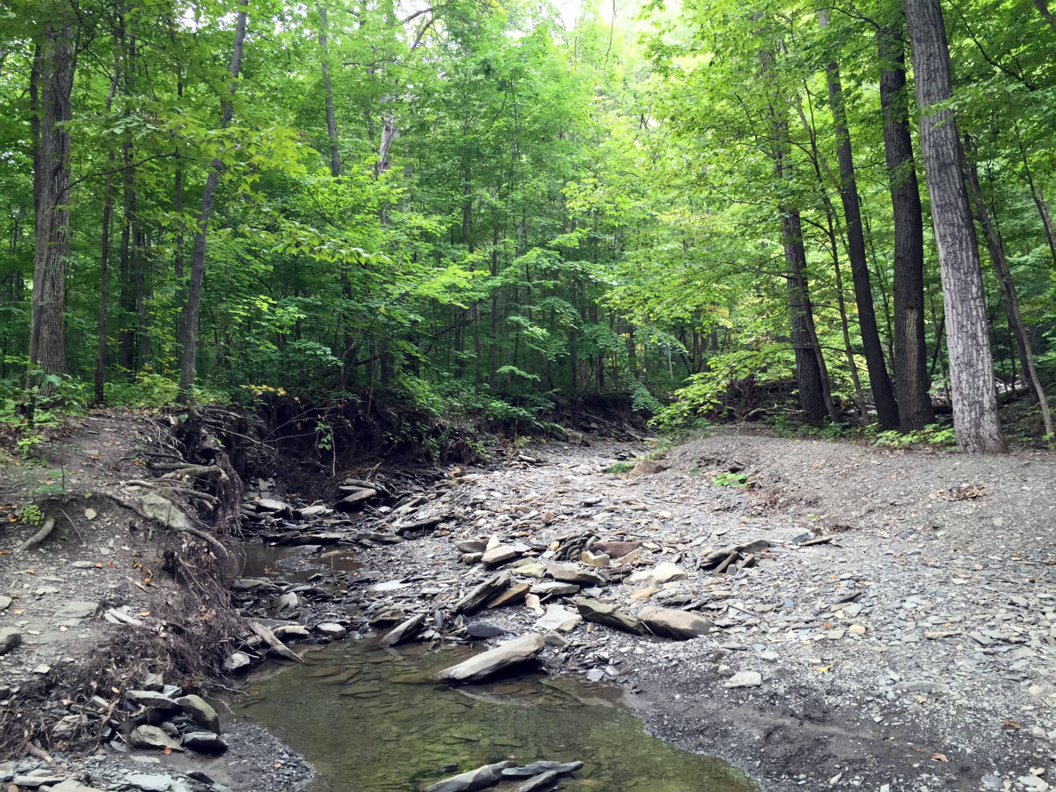 Clark Gully in Naples, New York