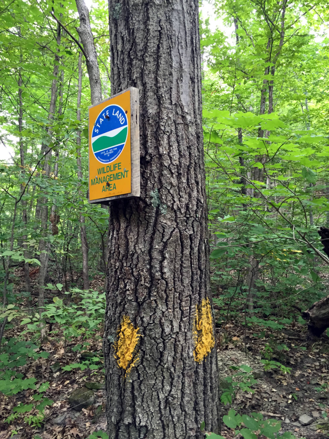Trail Sign in Clark Gully in Naples, NY