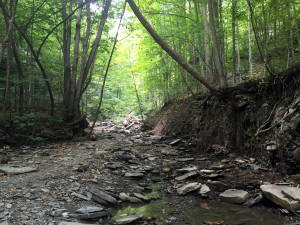 Streambed in Clark Gully in Naples, New York