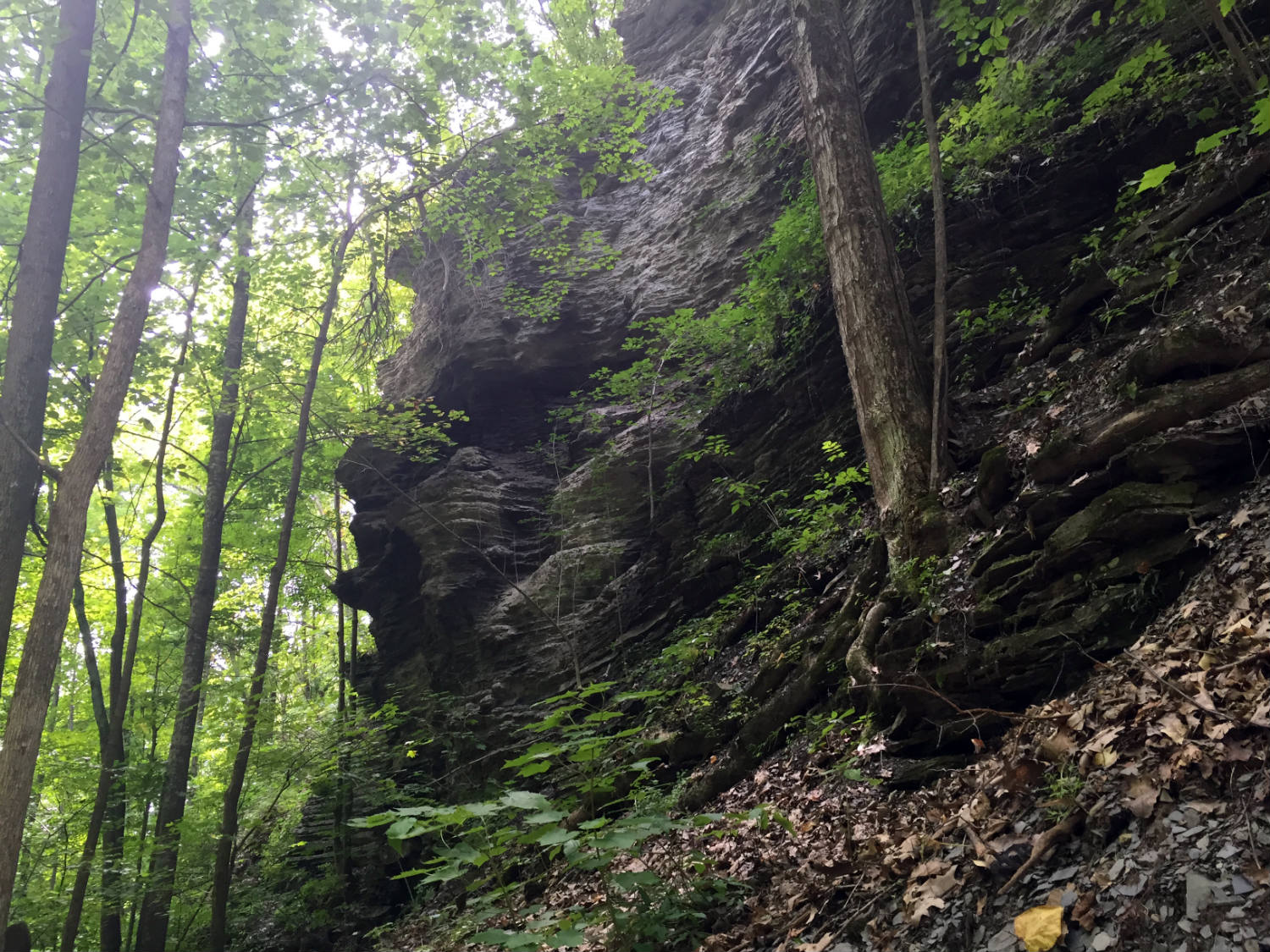 Ravine in Clark Gully in High Tor near Canandaigua Lake
