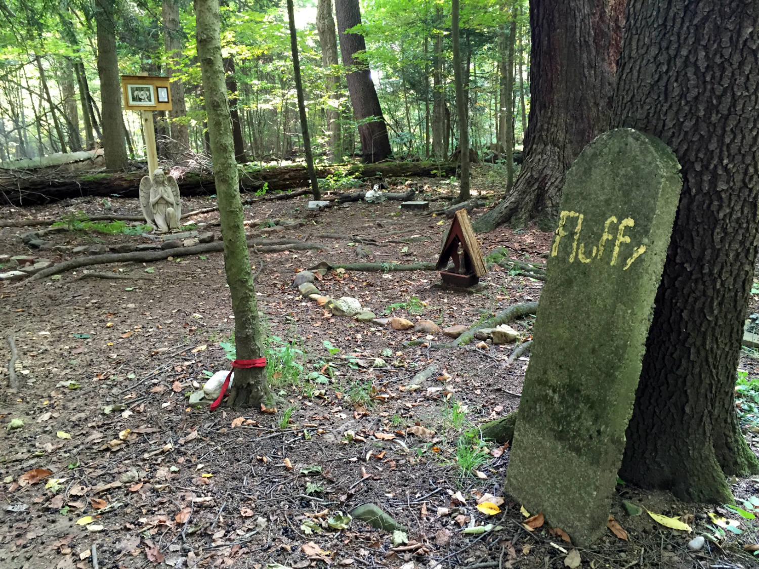 Pet Cemetery in Lily Dale