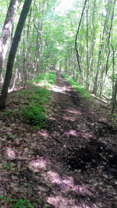 Conesus Railroad Bed Hiking Trail