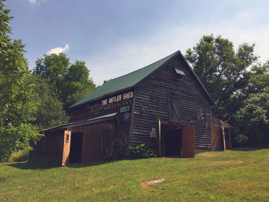 The Antler Shed - White Tail Museum and Taxidermy in West Valley, New York