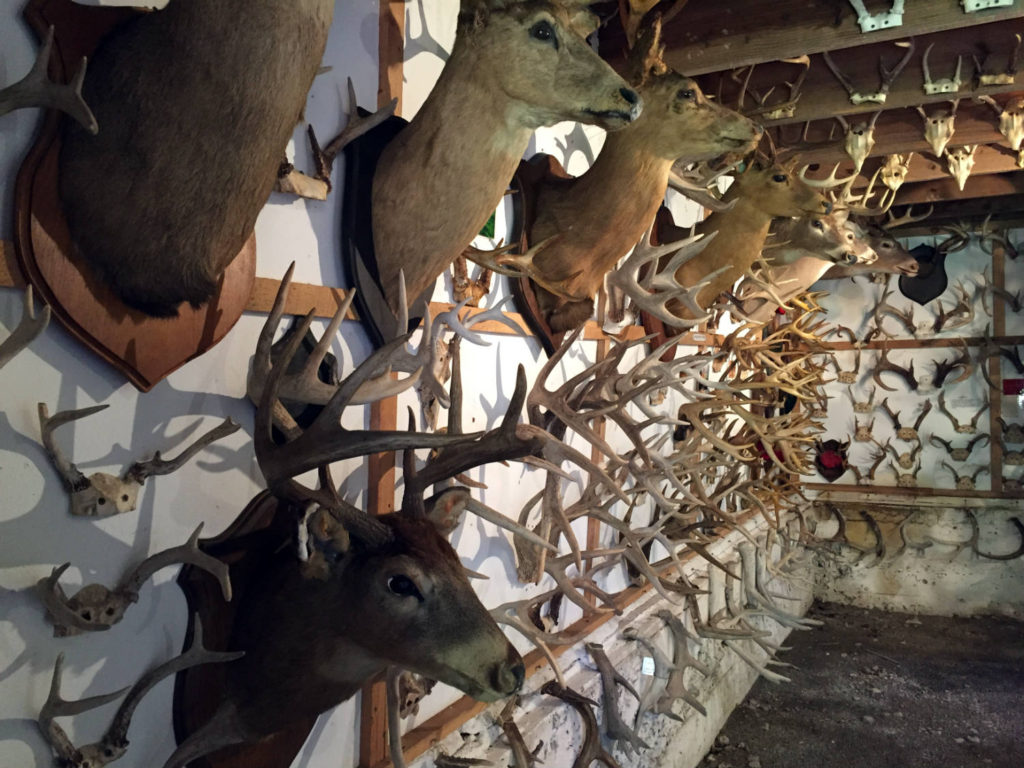 Antler Museum in New York