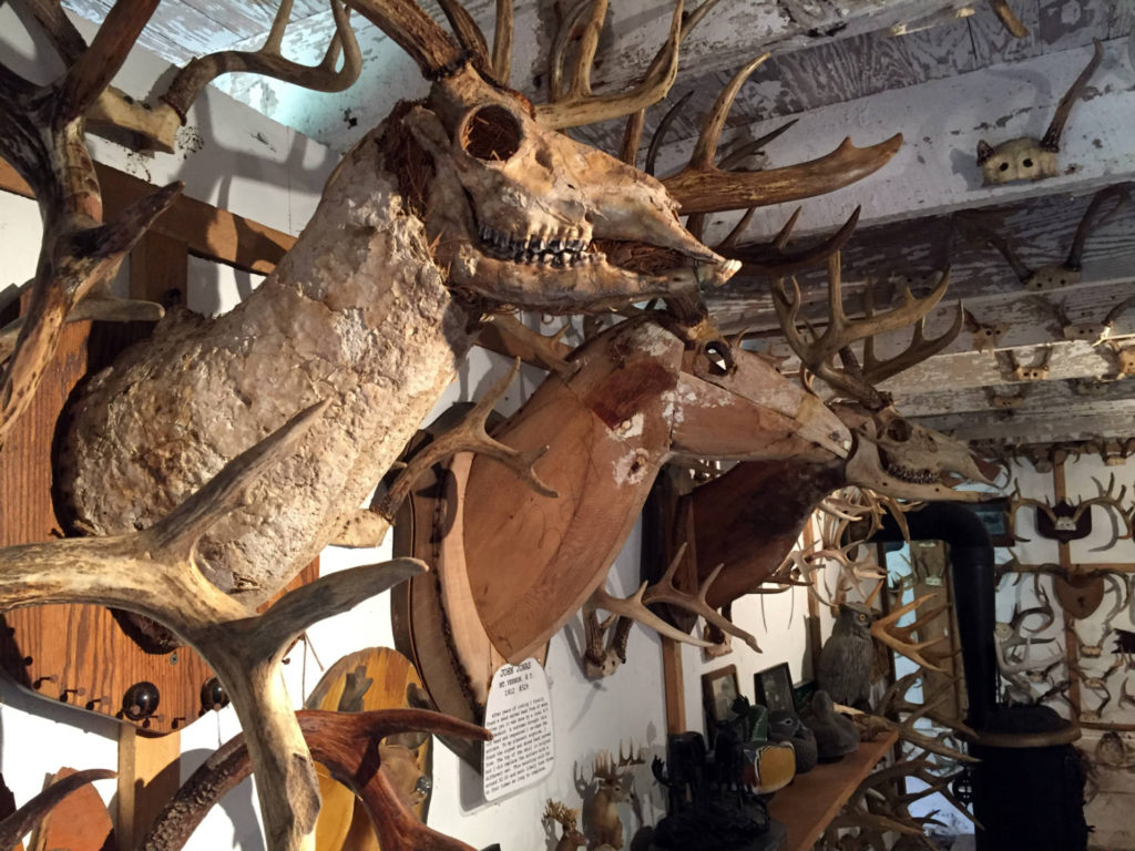 Museum of Antlers in Cattaraugus County