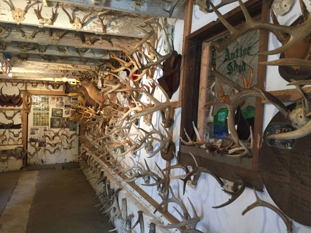 Antler Exhibit in Cattaraugus County