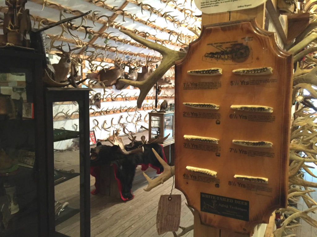 The Antler Shed and Whitetail Museum in Cattaraugus County