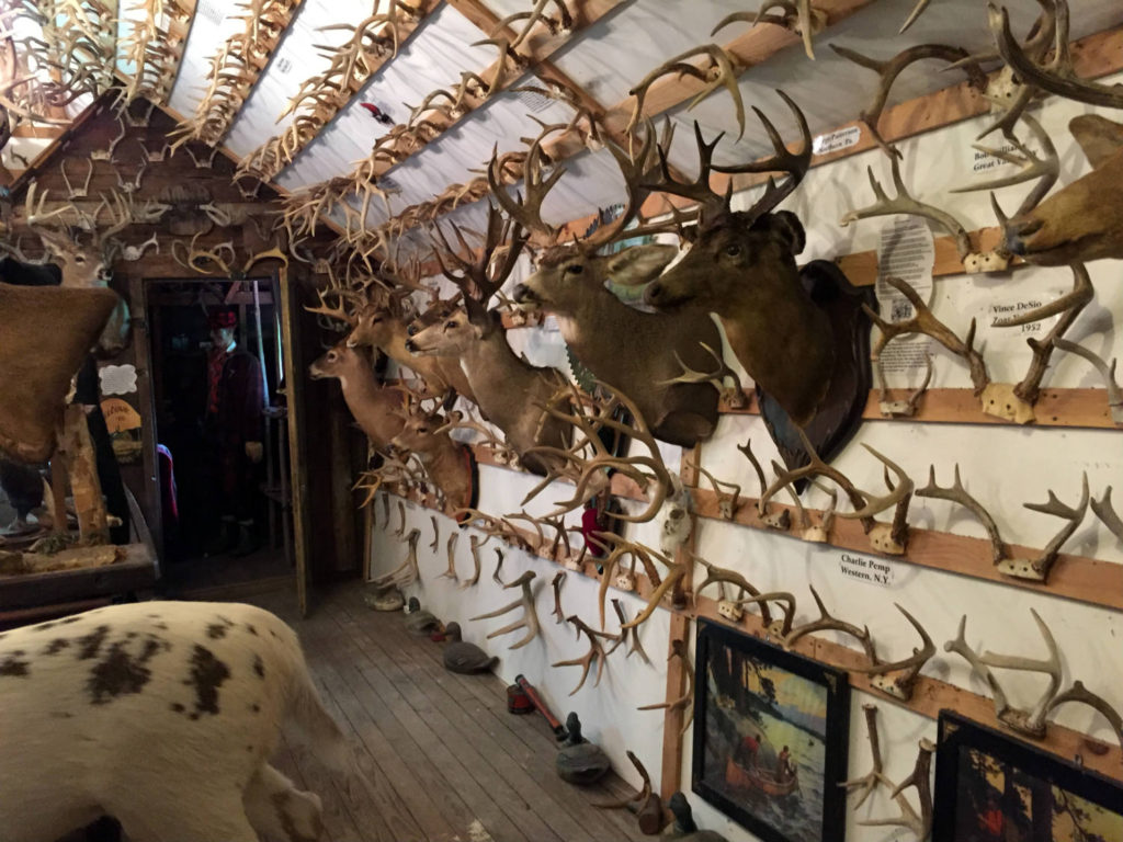 Shoulder Mounted Deer in the Antler Shed in West Valley, New York