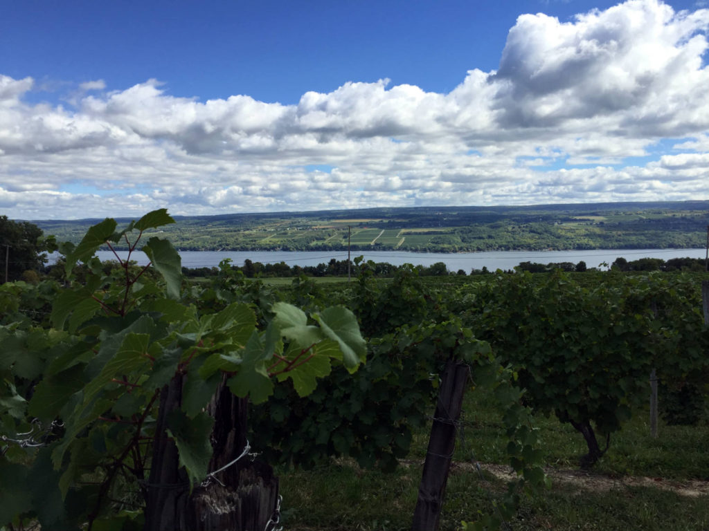 Vines and Seneca Lake in Dundee, New York