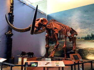 Mastodon Skeleton at the Museum of the Earth in Ithaca, New York