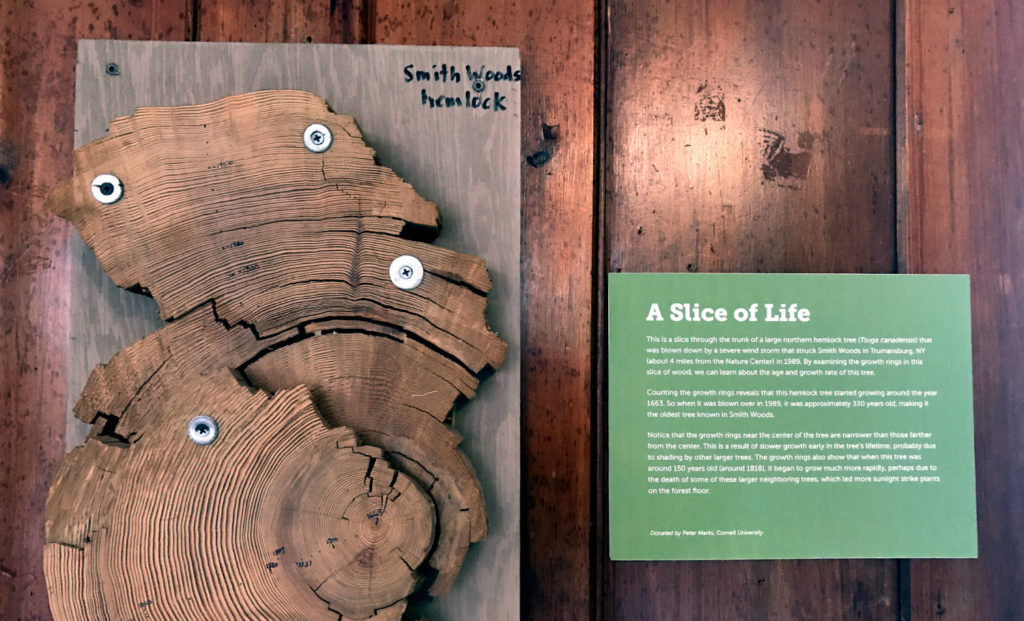 Tree Ring Exhibit at the Cayuga Nature Center in Ithaca, New York