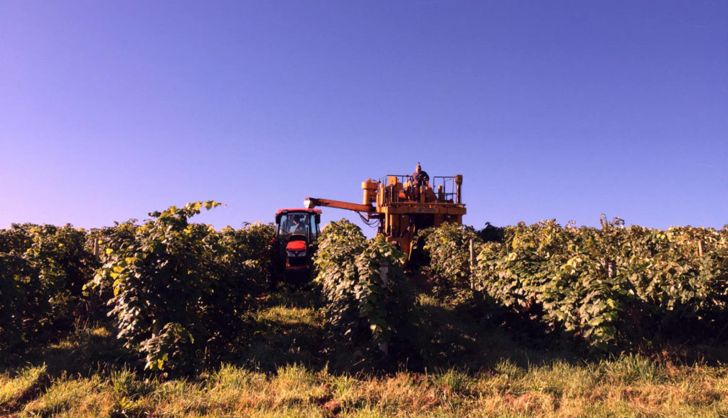 Grape Harvest in the Finger Lakes