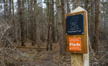 Black Creek Park Fairy Trail - Featured Image
