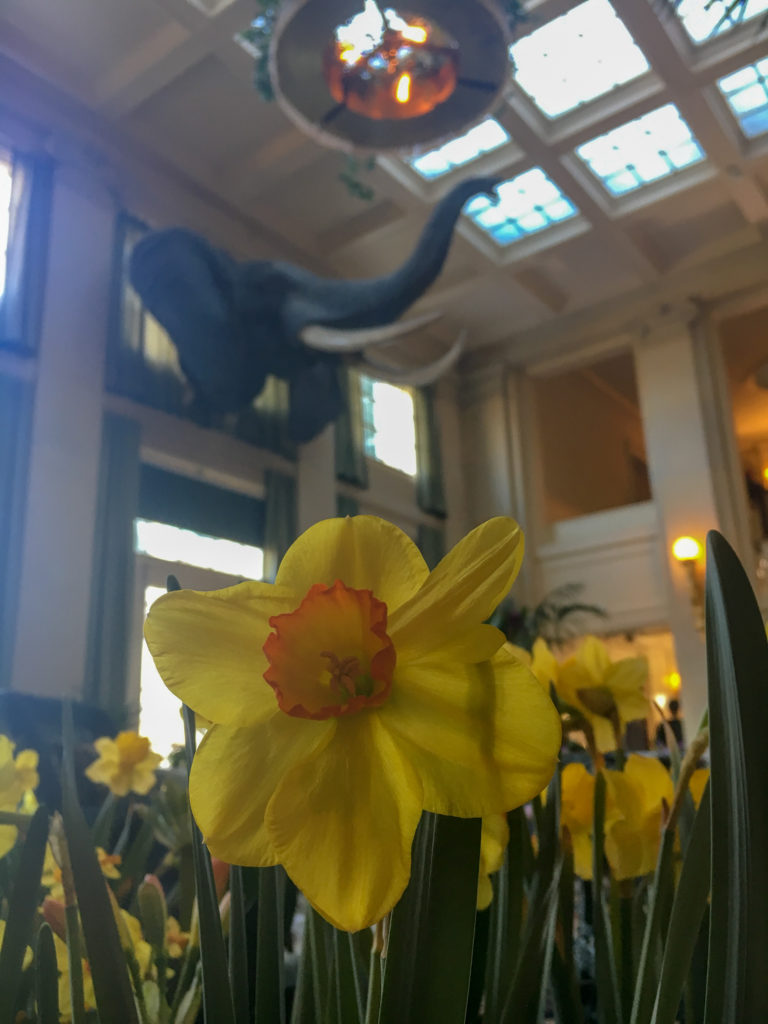George Eastman Museum Parlor with Elephant Head in Rochester