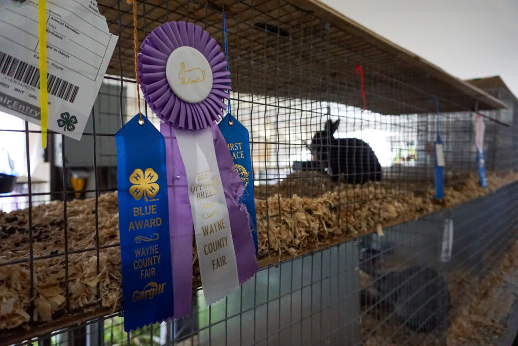 Rabbit Awards at the Wayne County Fair in Palmyra