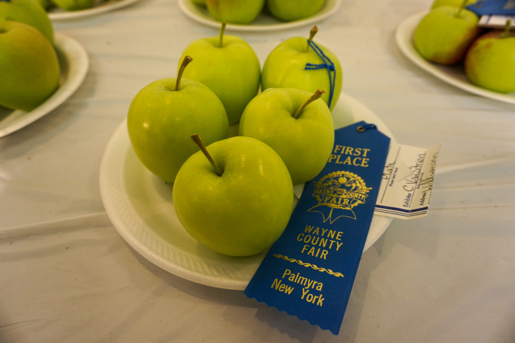 First Place Apples at the Wayne County Fair in Palmyra