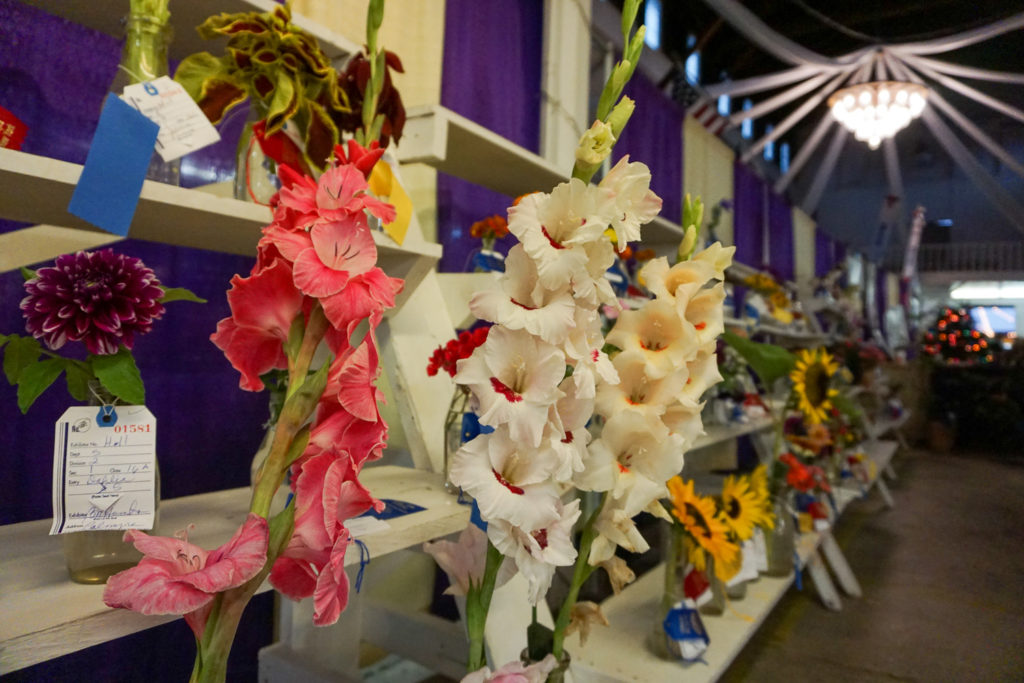 Flowers at the Wayne County Fair in Palmyra