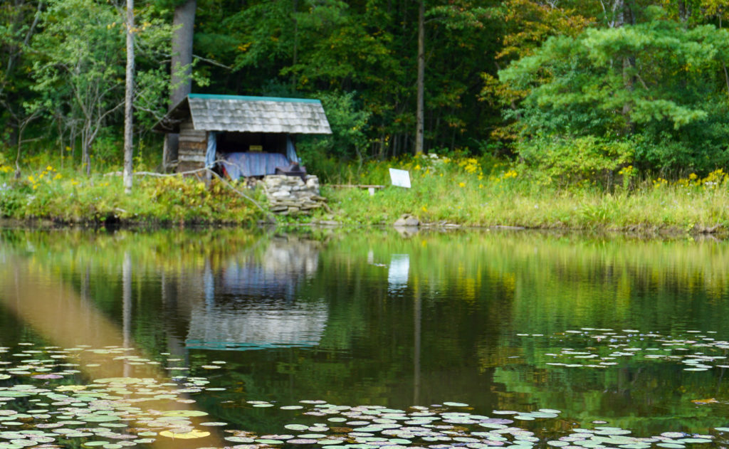 The Lily Pad at Pollywog Holler in Belmont, New York, Allegany County