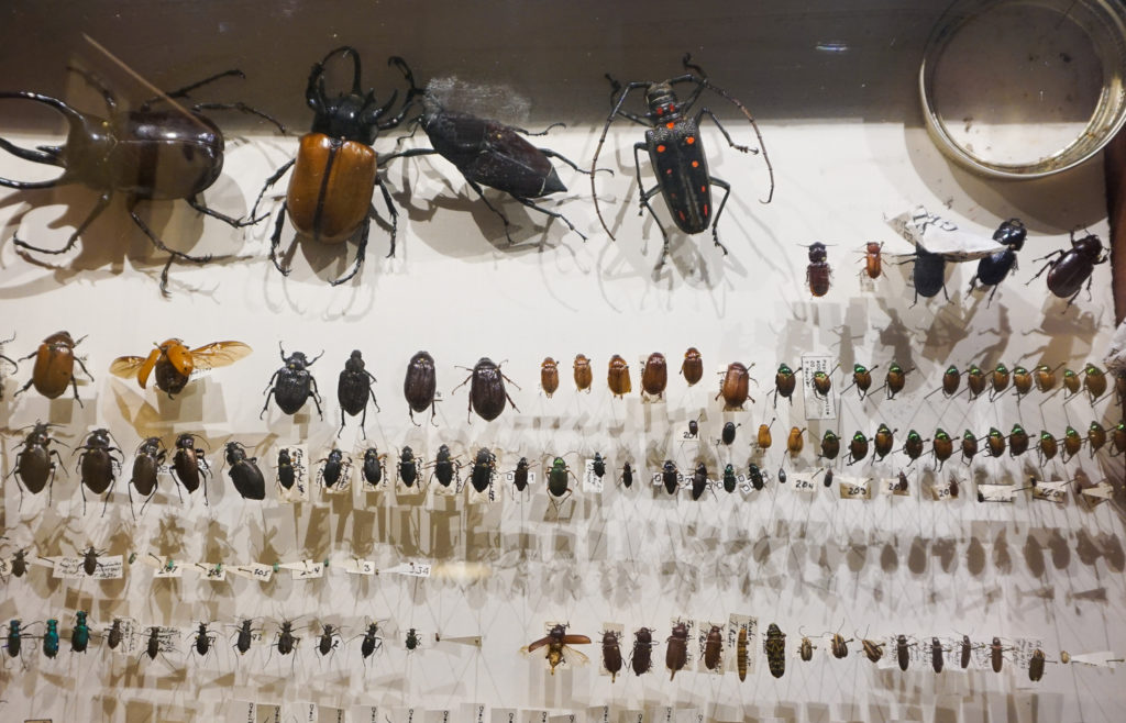 Antique Bug Collection at shop in Angelica, New York