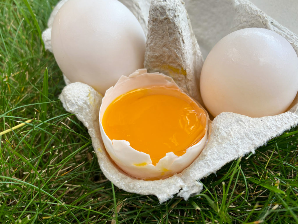 Duck Eggs Yolk